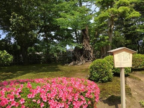 2016-05-31_10-05-38.jpg