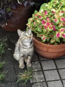 米山サビ子猫