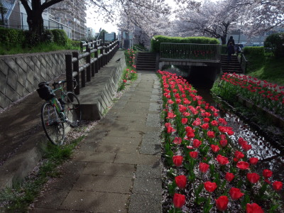 photo_colnago_tyurip_0406_2016_2_04006.jpg