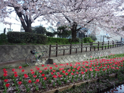 photo_colnago_tyurip_0406_2016_7_04006.jpg