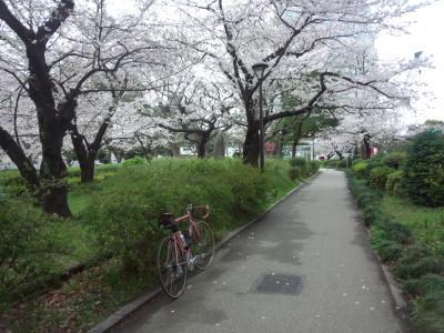 photo_derosa_tokyosakura_15_0402_2016_0402.jpg