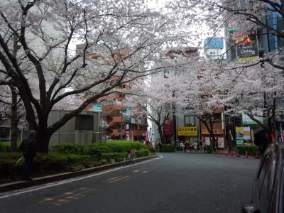 photo_derosa_tokyosakura_23_0402_2016_0402.jpg