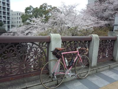 photo_derosa_tokyosakura_24_0402_2016_0402.jpg