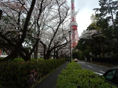 photo_derosa_tokyosakura_5_0402_2016_0402.jpg