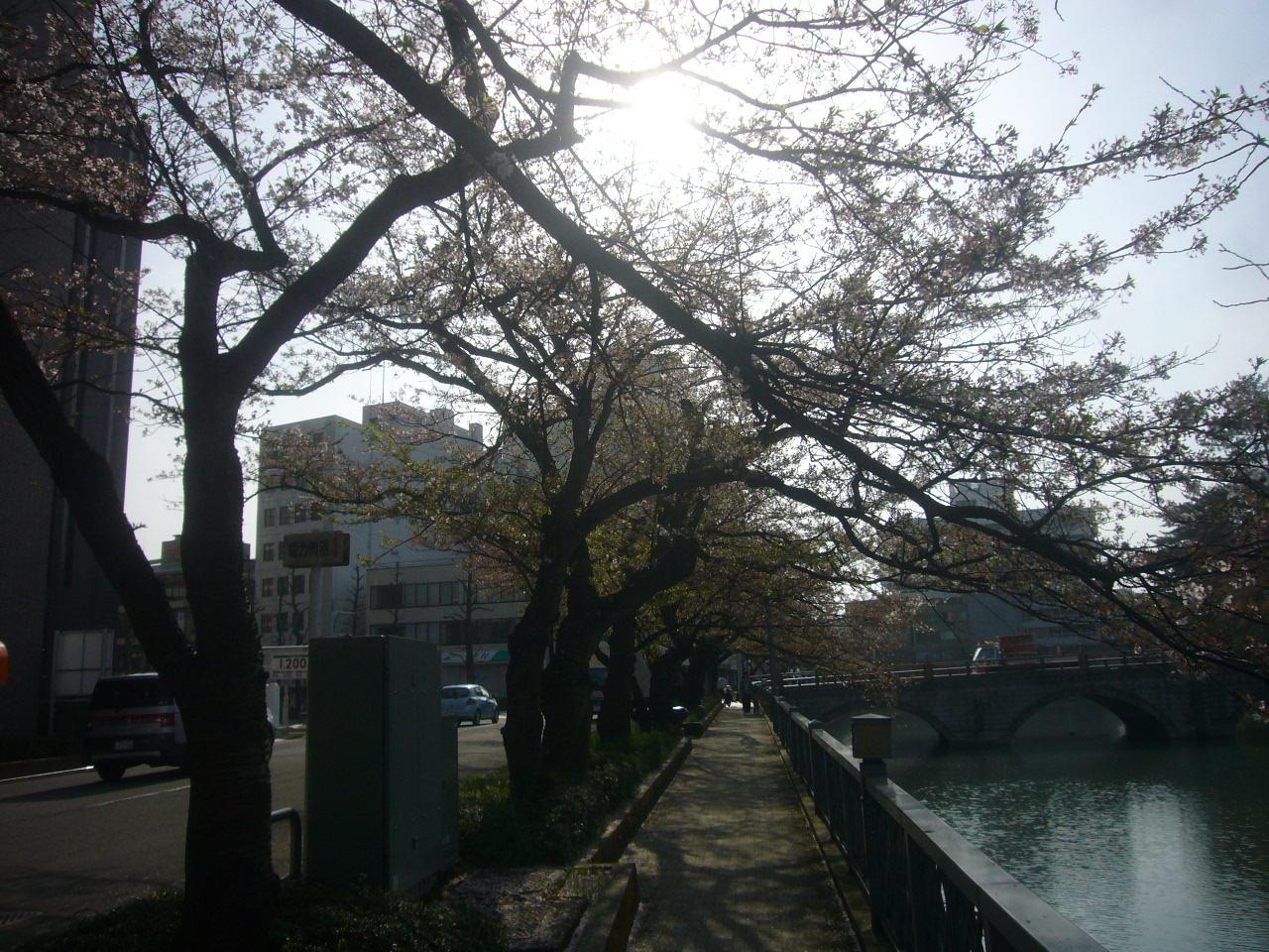 たそがれのうば桜 H28.4.09