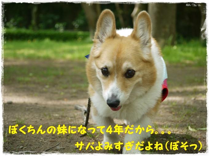 5-10P1480859-copy.jpg