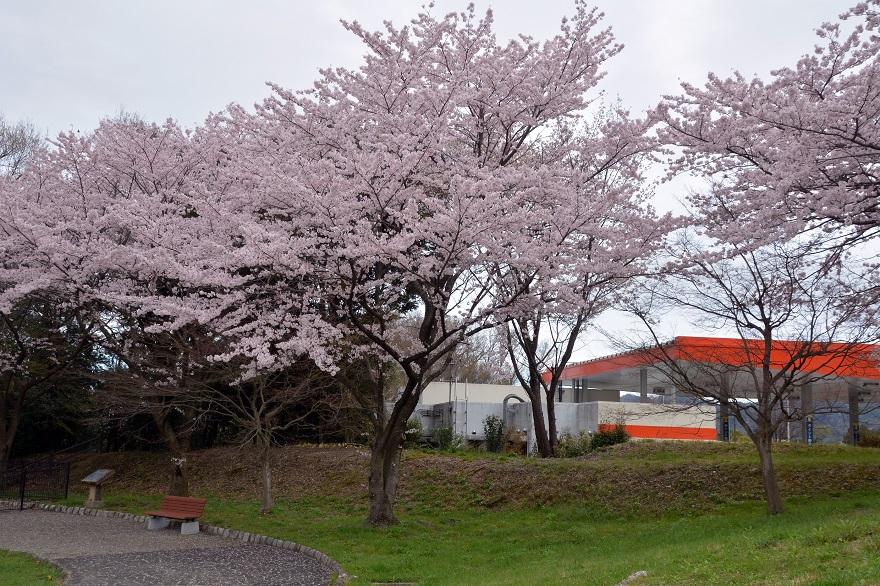 名神高速SA・桜 (1)