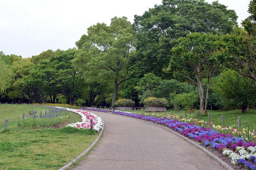 長居植物園のバラ (30)