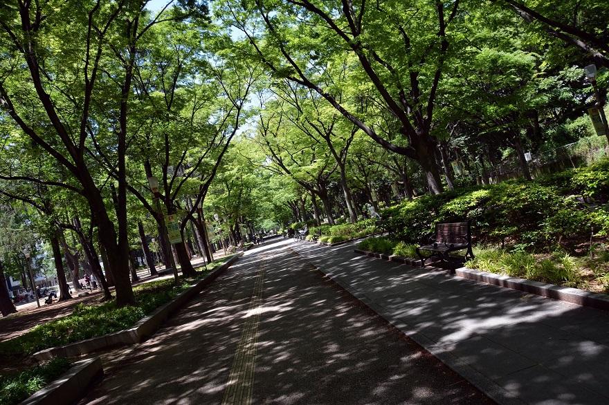 靭公園のバラ園 (2)