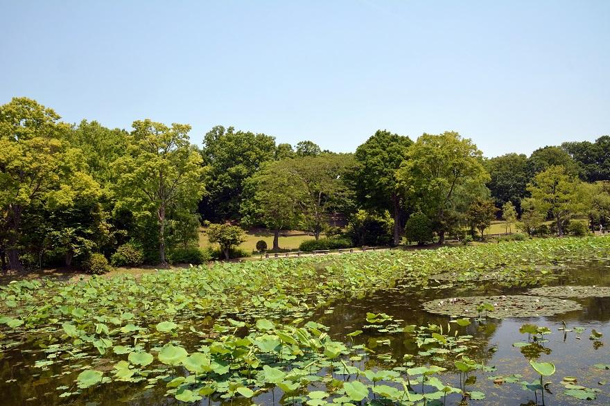 日本庭園 (6)