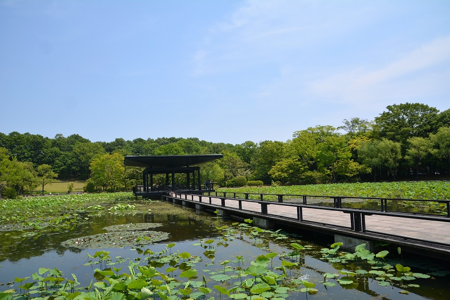 日本庭園 (7)
