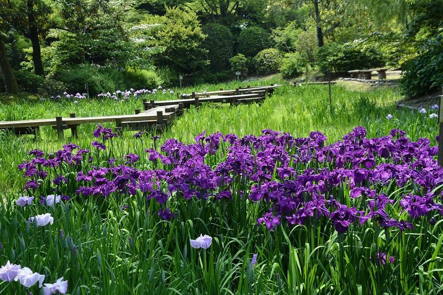 日本庭園 (13)