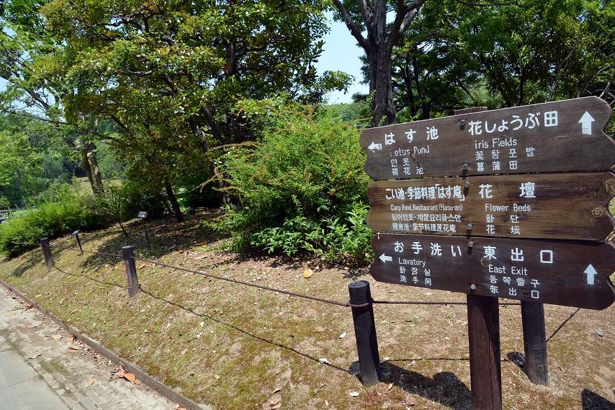 日本庭園 (16)