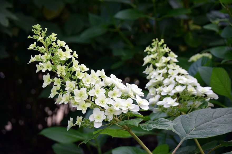 初夏の長居植物園 (3)