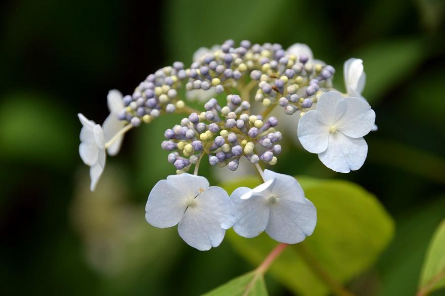 初夏の長居植物園 (4)