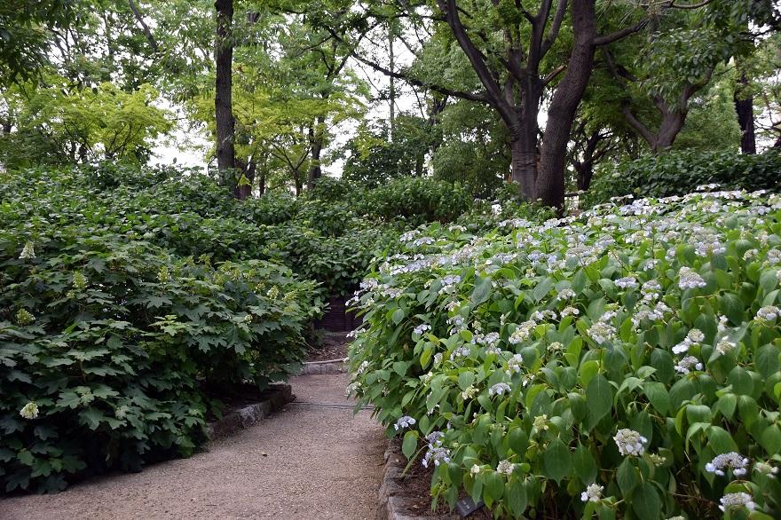初夏の長居植物園 (5)