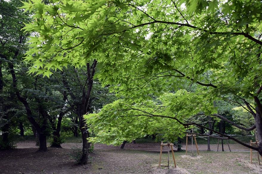 初夏の長居植物園 (6)