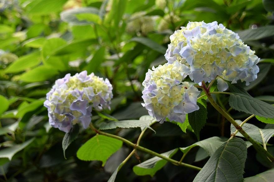 初夏の長居植物園 (7)