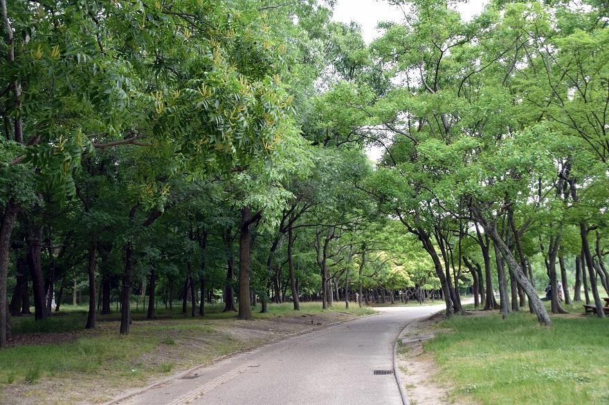 初夏の長居植物園 (013)