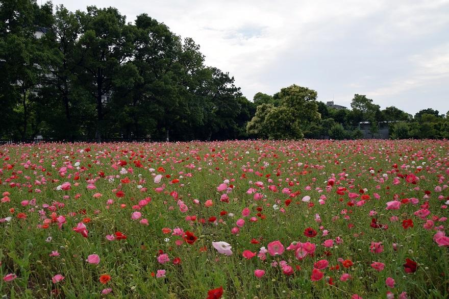 初夏の長居植物園 (13)