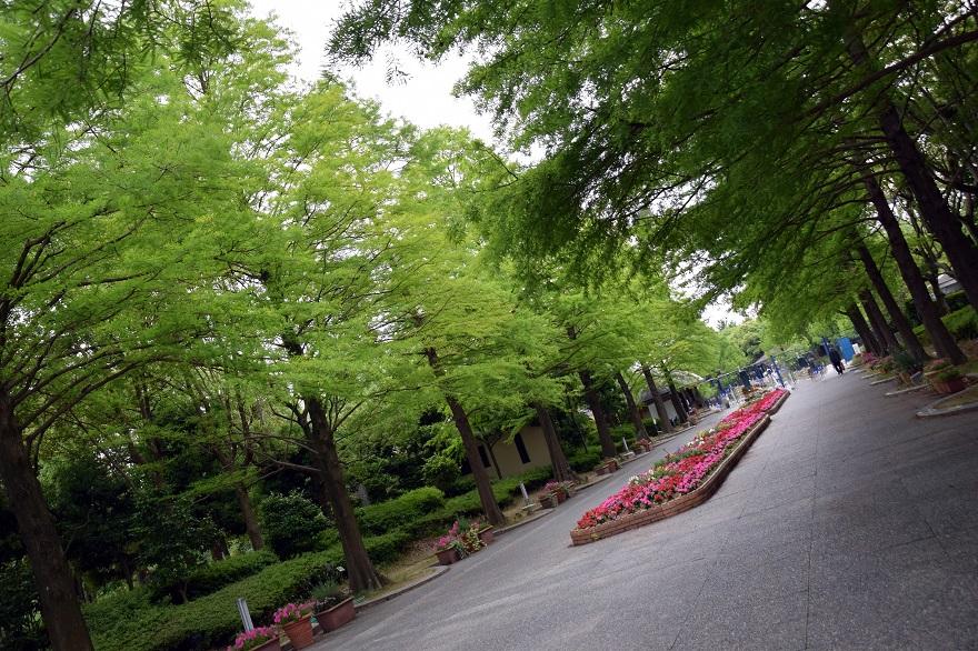 初夏の長居植物園 (23)