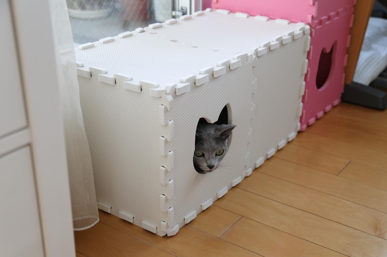 エマ猫トンネル小