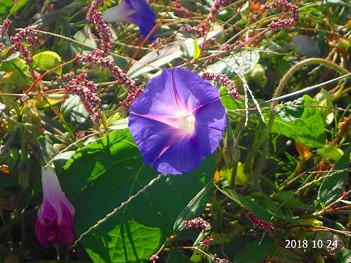 s-紫の花20181024