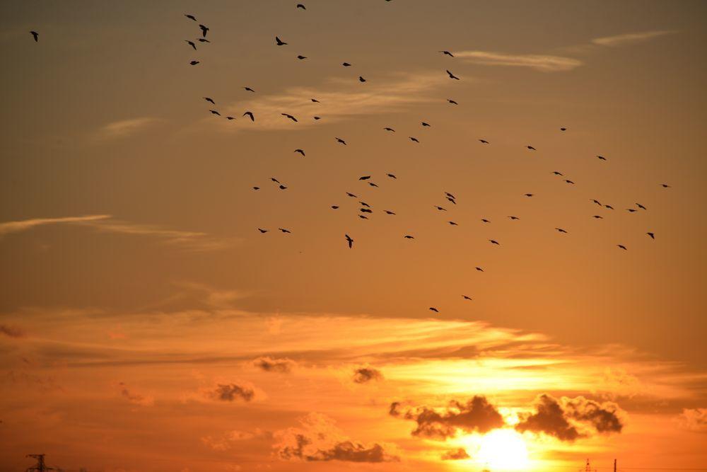 川に夕陽-5