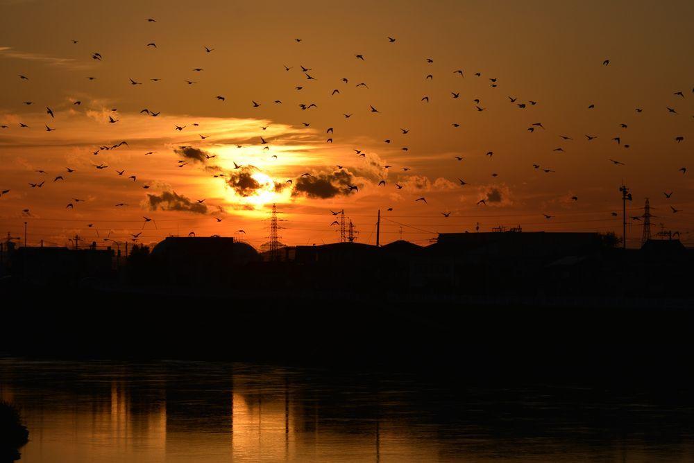 川に夕陽-6