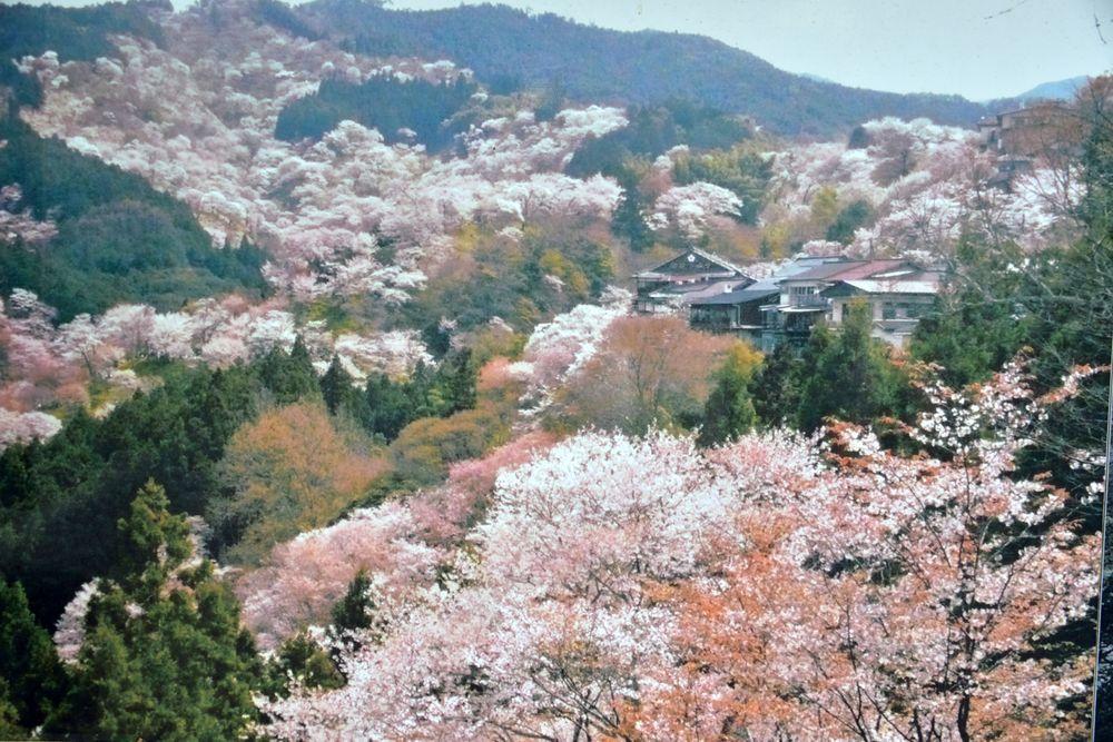 吉水神社-8