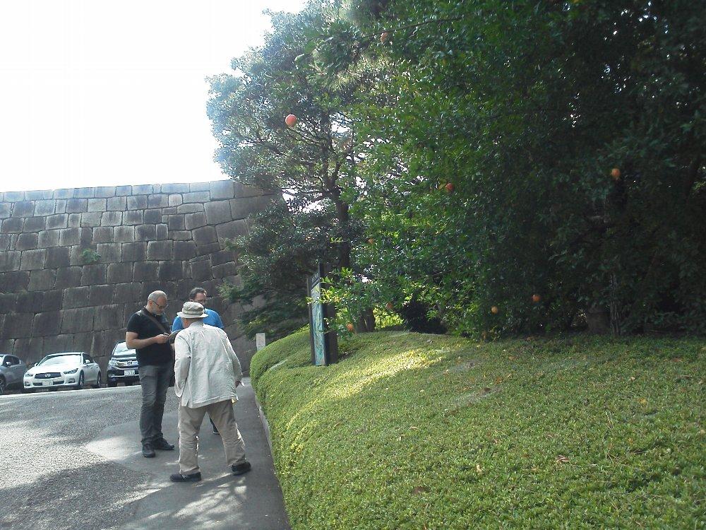F1000113皇居東御苑10月20日天守台横のザクロ