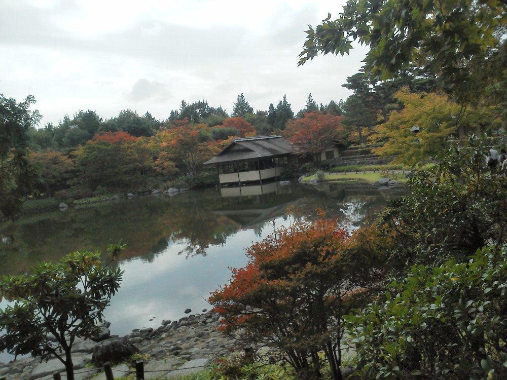 F1000155昭和記念公園10月26日日本庭園