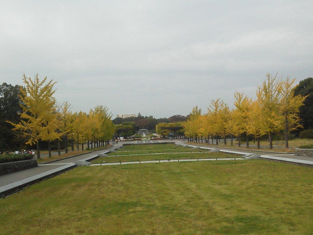 F1000129昭和記念公園10月26日立川口前いちょう並木