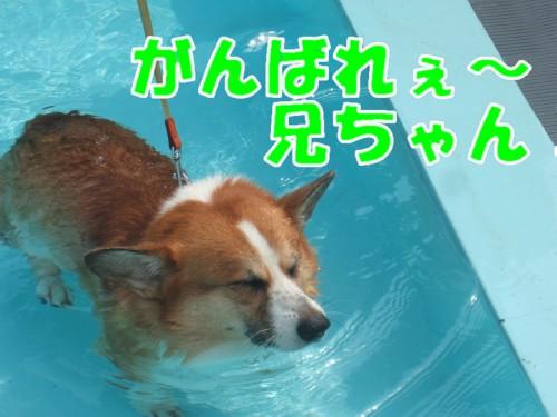 2011_0815_113605-DSCF1306a.jpg