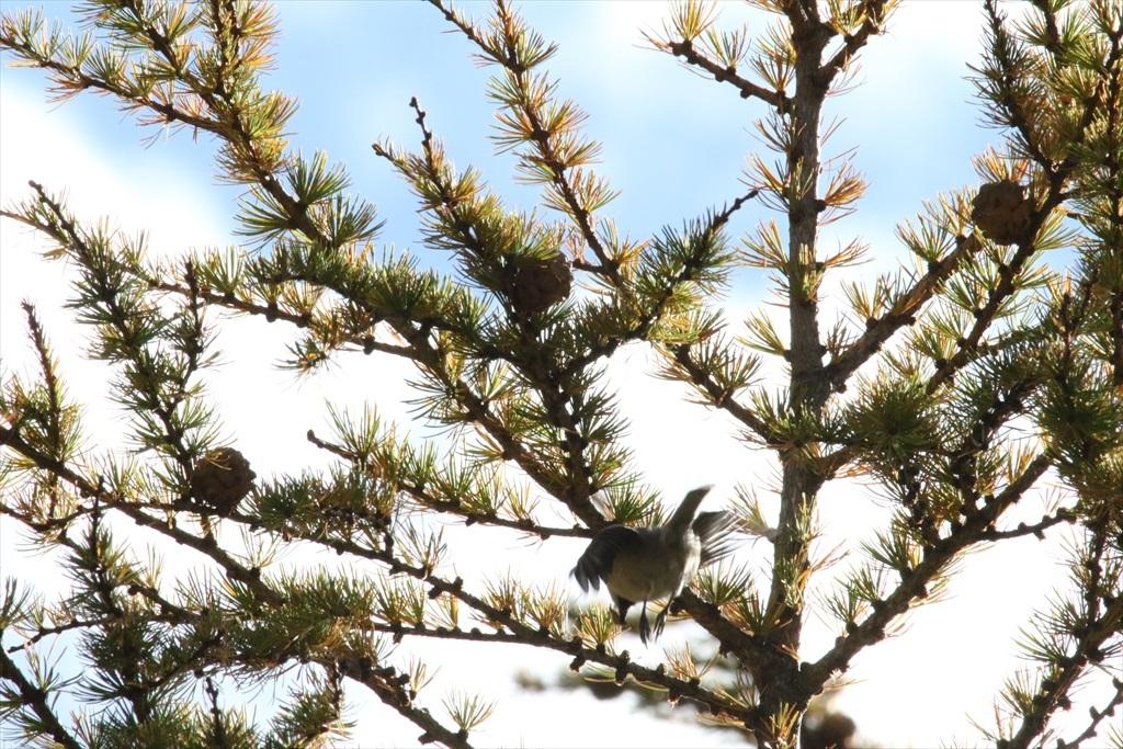 樹上に居たぞ_9