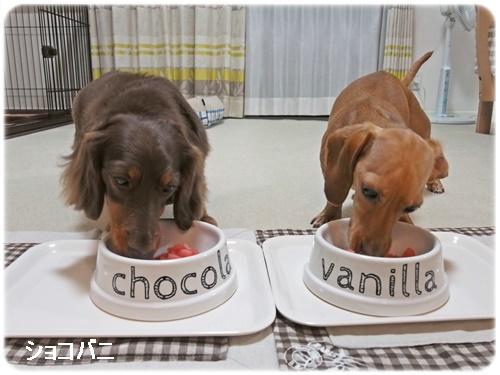 ショコラとバニラ