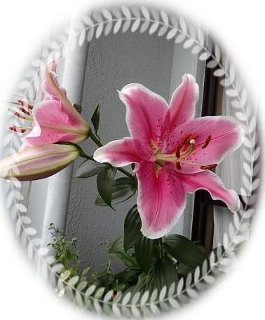 lily7-n.jpg