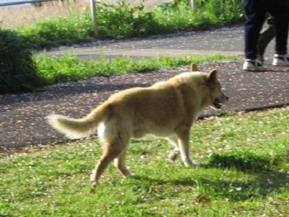 9T01 ノラ犬 20160415
