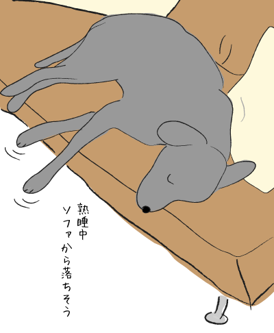 熟睡中のラブラドール