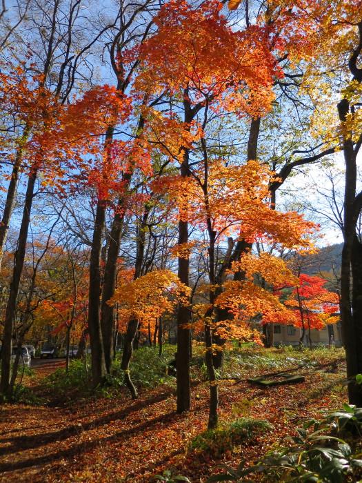 十和田湖八幡平 青森 紅葉