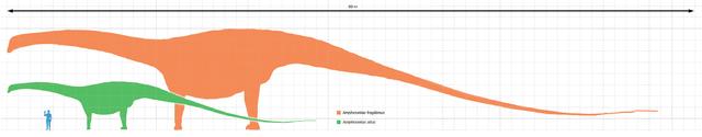 640px-Amphicoelias_altus_scale.png