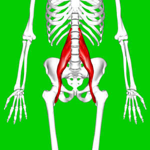 Psoas_major_muscle11.png
