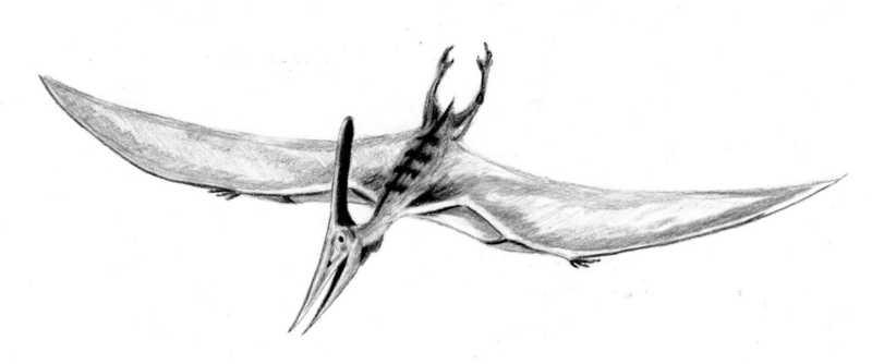 Pteranodon_BW.jpg
