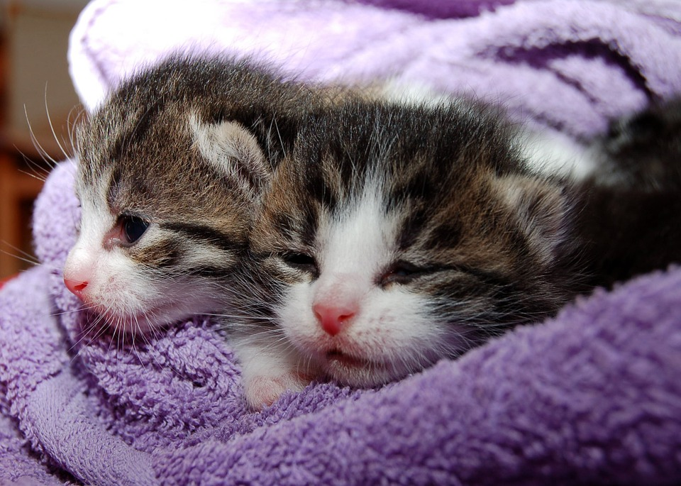 cat-205757_960_720.jpg