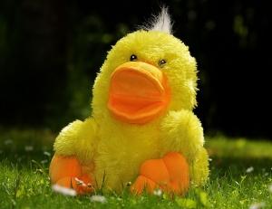 duck-783684_960_720.jpg
