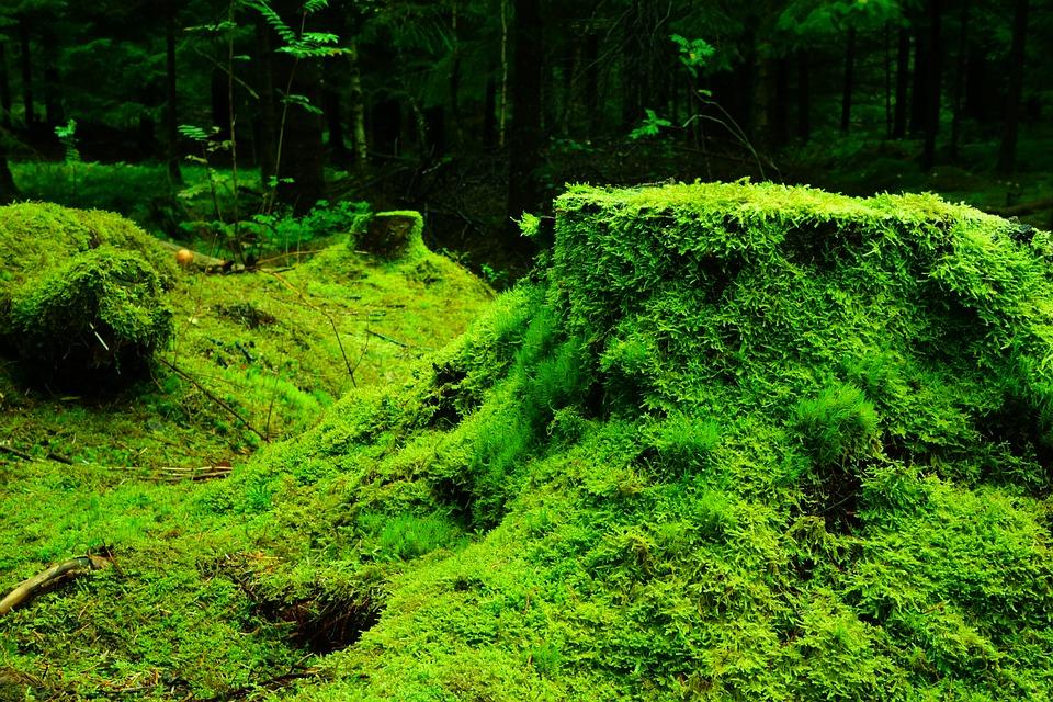 forest-483206_960_720.jpg