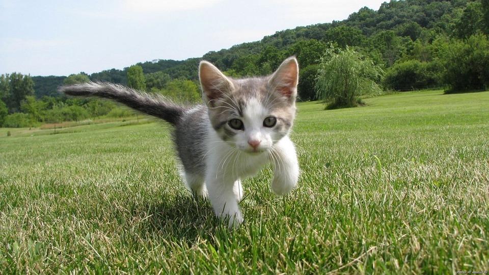 kitten-1246693_960_720.jpg