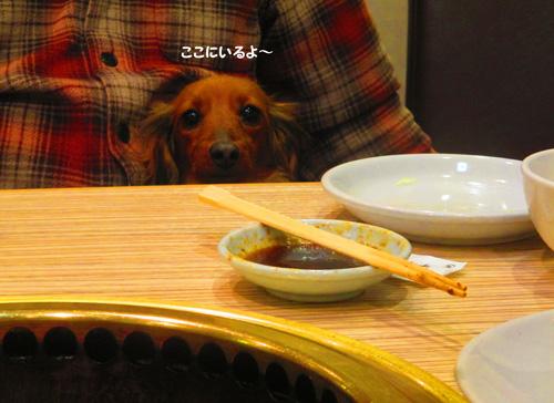 2016-2-daiba127.jpg