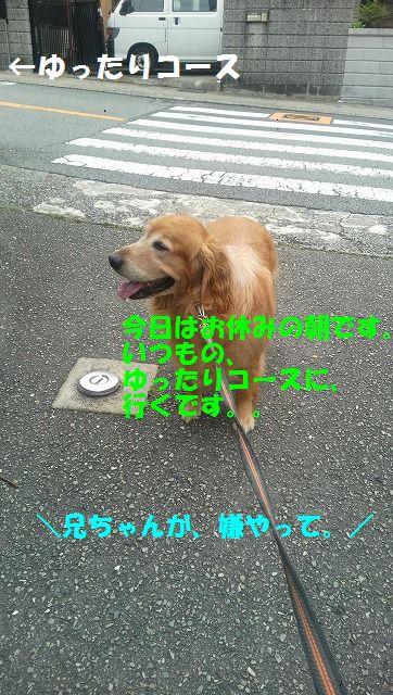 DCIM1129.jpg