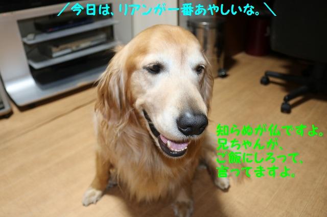 IMG_4110_20160518220526ab4.jpg